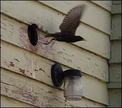 bird removal North Carolina